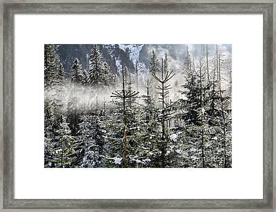 Winter Wonderland  Framed Print by Mariola Bitner