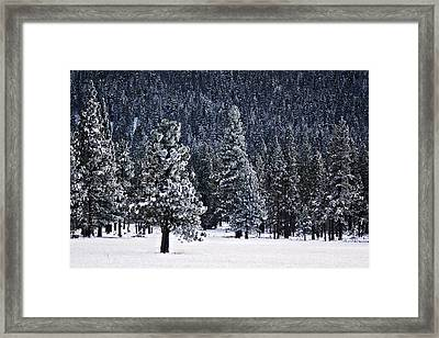 Winter Wonderland Framed Print by Melanie Lankford Photography