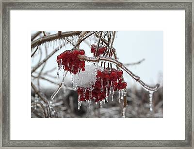 Winter Wonderland Framed Print by Nick Mares