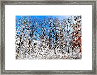 Winter Wonderland Framed Print by Frozen in Time Fine Art Photography