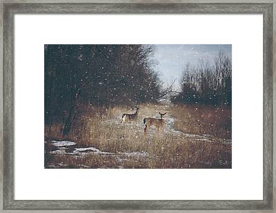 Winter Wonders Framed Print by Carrie Ann Grippo-Pike