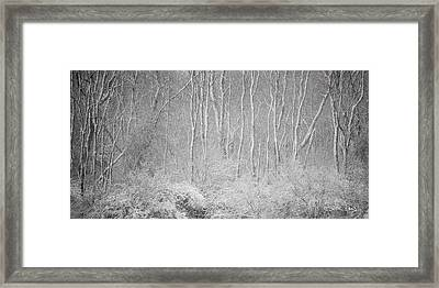 Winter Wood 2013 Framed Print by Joan Davis