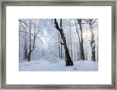Winter Wood Framed Print by Evgeni Dinev