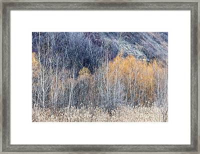 Winter Woodland  Framed Print by Elena Elisseeva
