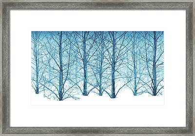 Winter Woodland In Blue Framed Print