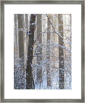 Winter Woodland Framed Print
