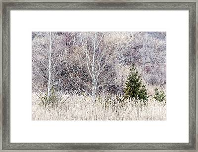 Winter Woodland With Subdued Colors Framed Print