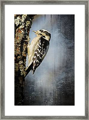 Winter Woodpecker Framed Print by Lena Wilhite