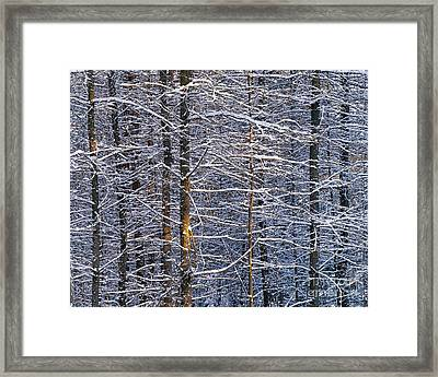 Framed Print featuring the photograph Winter Woods by Alan L Graham
