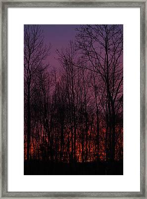 Winter Woods Sunset Framed Print by Karol Livote