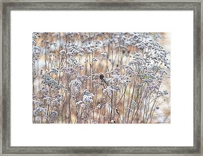 Framed Print featuring the photograph Winter by Yvonne Emerson AKA RavenSoul