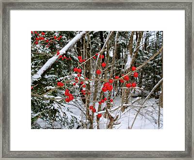 Winterberry Framed Print