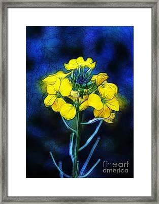 Wintercress Framed Print by Judi Bagwell