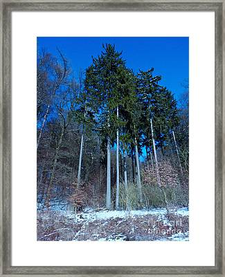 Winterforest Framed Print