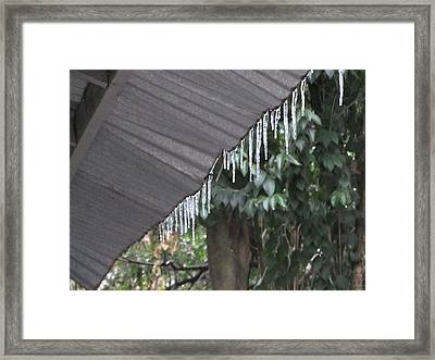Wintergreen Framed Print by Hal Gould