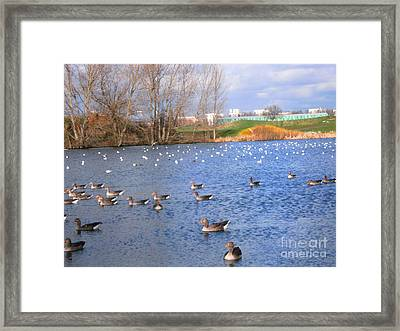 Framed Print featuring the photograph Wintering Birds - Mayesbrook Park by Mudiama Kammoh