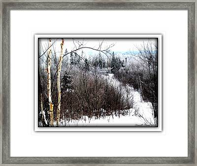 Winterlude Framed Print by Danielle  Parent
