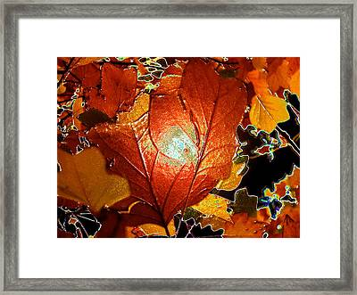 winters autumn in Pasadena Framed Print