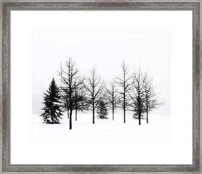 Winter's Bareness II Framed Print