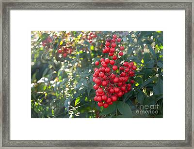 Framed Print featuring the photograph Winter's Berries by Lena Wilhite