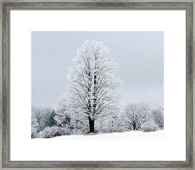 Winter's Blanket Framed Print