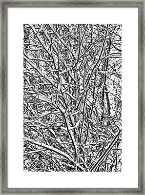 Winters Branches Framed Print