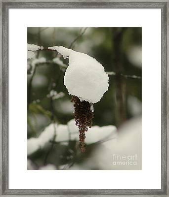 Winter's Cap Framed Print