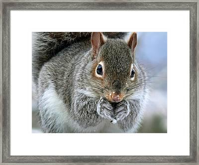 Cute Winter Squirrel Framed Print