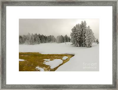Winter's Contrast - Yellowstone National Park Framed Print by Sandra Bronstein