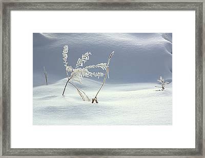 Winter's Dance Framed Print by Kathy Bassett