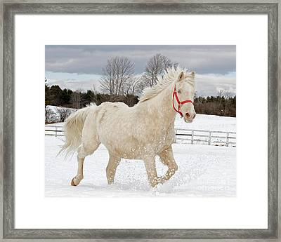Winters Dance Framed Print