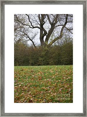 Winters Dawn 3 Framed Print