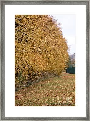 Winters Dawn 4 Framed Print