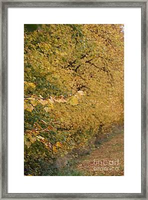 Winters Dawn 5 Framed Print