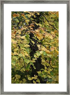 Winters Dawn 9 Framed Print