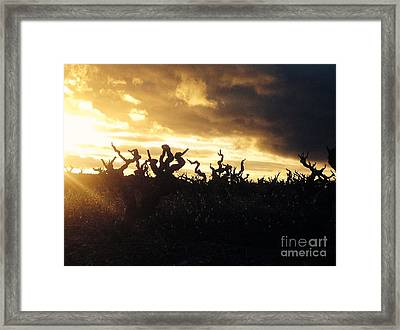 Winters Eve In The Vineyard Framed Print
