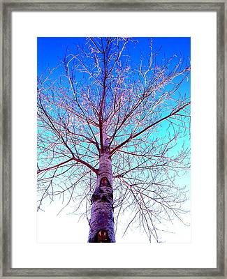 Winters Freeze Framed Print by Sharon Costa
