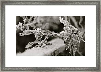 Winters Frost Framed Print by Karen Grist