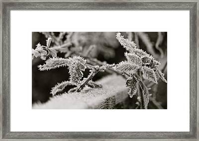 Winters Frost Framed Print by Karen Grist