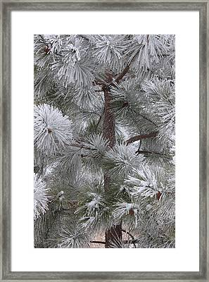 Winter's Gift Framed Print by Penny Meyers