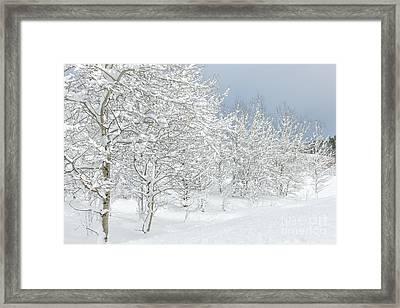Winter's Glory - Grand Tetons Framed Print by Sandra Bronstein