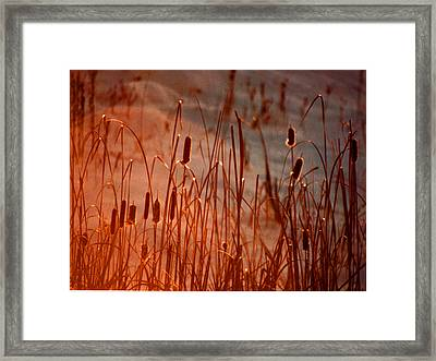 Framed Print featuring the photograph Winter's Glow by R Thomas Brass