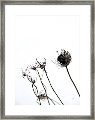 Winter's Lace Framed Print by Doug Hockman Photography