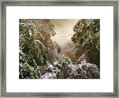 Winter's Lace Framed Print