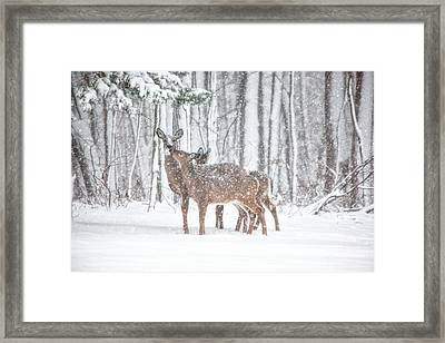 Winters Love Framed Print by Karol Livote