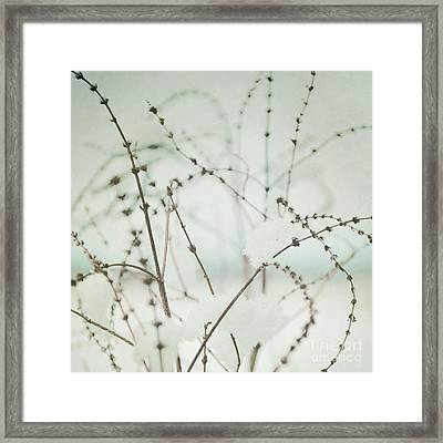 Winter's Magic Framed Print by Sharon Coty