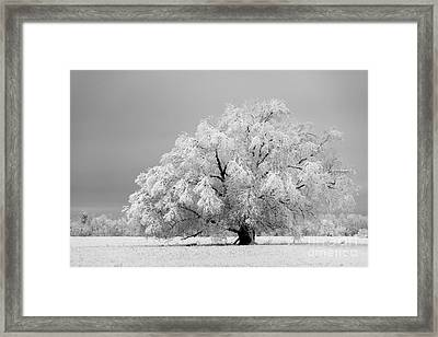 Winter's Majesty II Framed Print