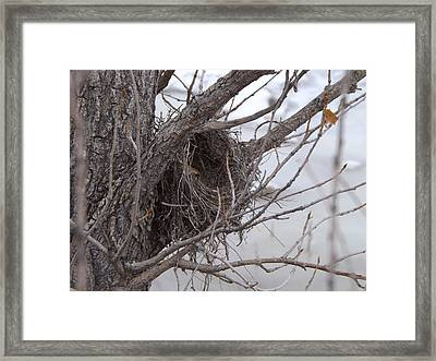 Winter's Nest Framed Print