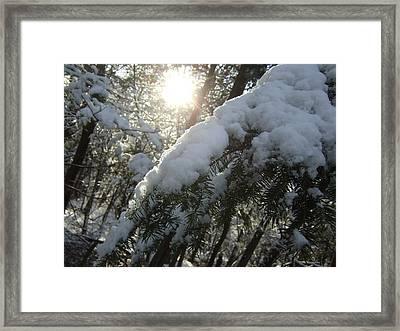 Winter's Paw Framed Print