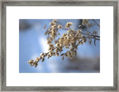 Winter's Peace Framed Print